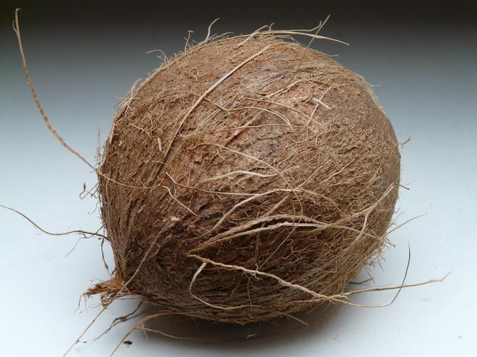 coconut_coconuts_exotic_sweet_1
